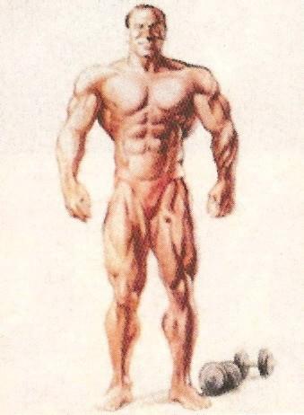 Генетически одаренный тип, наилучший потенциал для бодибилдинга.  От природы силен и мускулист.
